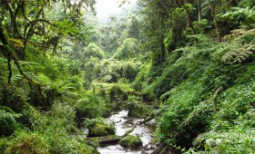 Nyungwe Forest is a great option for a weekend trip from Kigali – easy to organize, beautiful scenery, and relatively affordable.  The windy drive through […]
