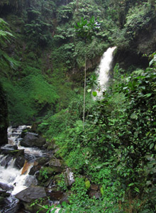 Nyungwe Forest Waterfall Hike
