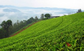 Sowarthe is a couple of hours drive outside Kigali and a great place to come for a night or two of relaxation, tea drinking, and […]