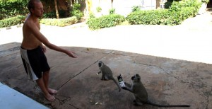 Phone Monkey